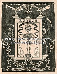 Frederik Ruysch Anatomical Poster
