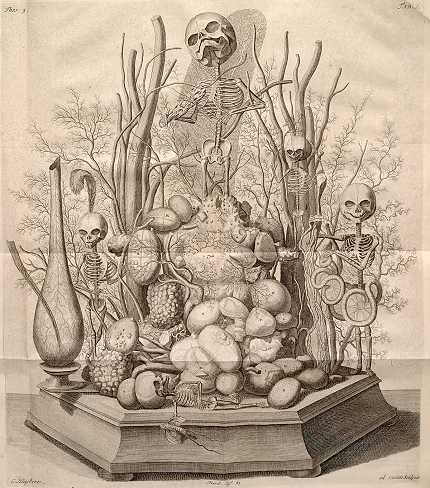 Frederik Ruysch Diorama illustrated by Cornelius Huyberts