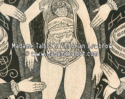 Anatomical Venus Poster
